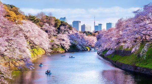 Japon printemps florison 600x300 iStock