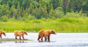 Les choses à voir et à faire en Alaska