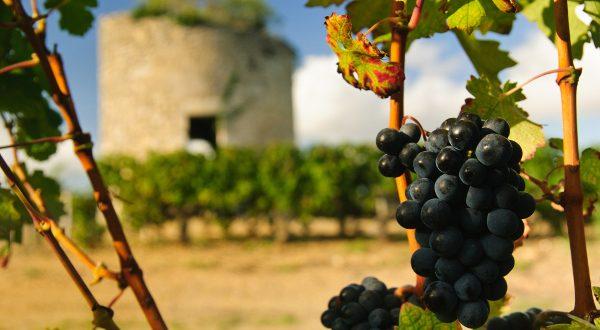 Vin Bordeaux iStock