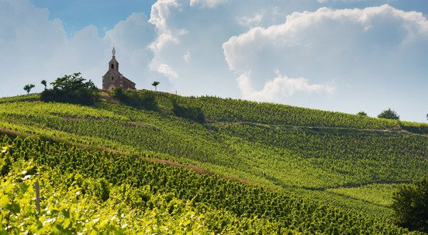 a 100km autour de lyon : vignobles du beaujolais
