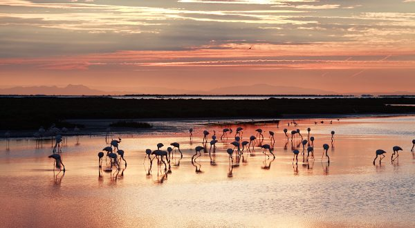 Camargue-France-iStock