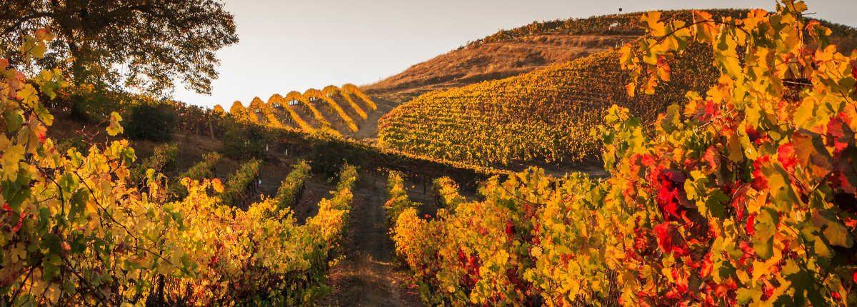 Coucher de soleil vignes France automne