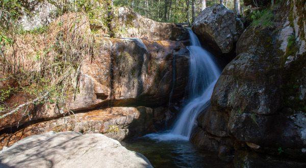 forêt d'Aitoine en Corse iStock