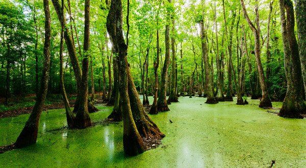 Bayou Louisiane iStock