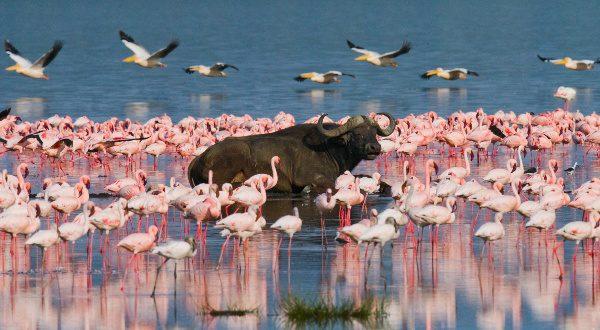 Kenya Lac Nakuru iStock