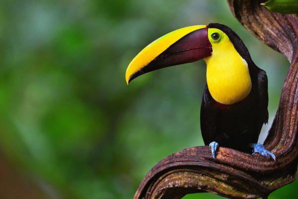 Tortuguero Costa Rica Shutterstock