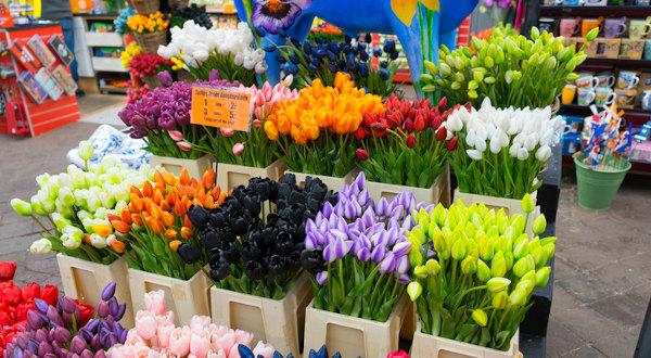 choses à faire à Amsterdam : Le Bloemenmarkt