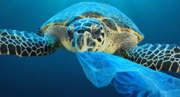 10 façons de protéger les océans à votre échelle en voyage